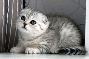 Как выбрать кличку для котенка: советы и рекомендации